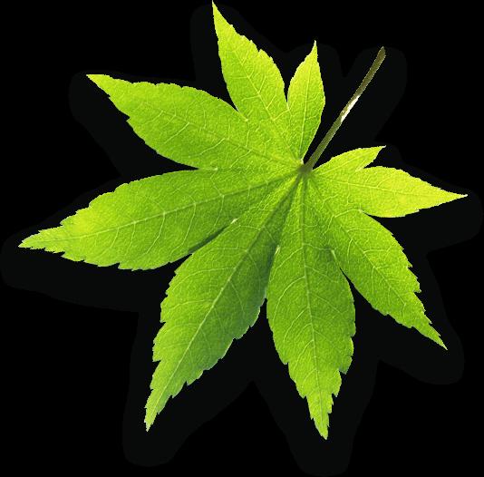 Innendämmung, Trockeneis, Holzschutz, lebensmittel, trockeneis, bautenschutzs